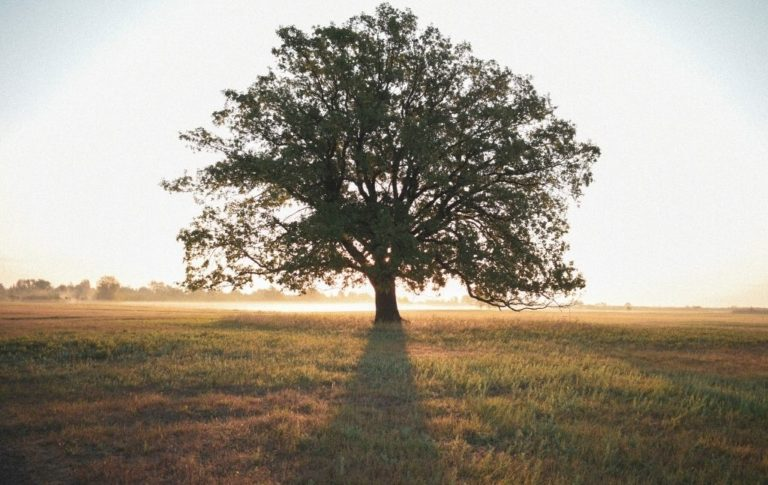 trees survivalists need to know