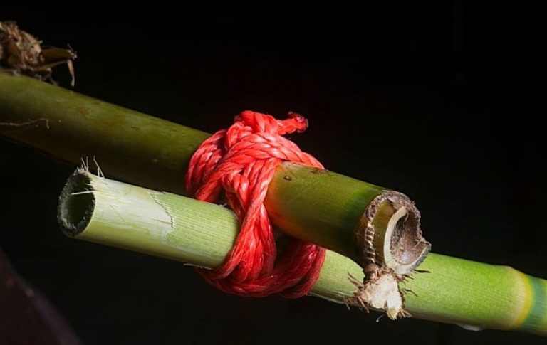 survival knots you need to know for survival and escape
