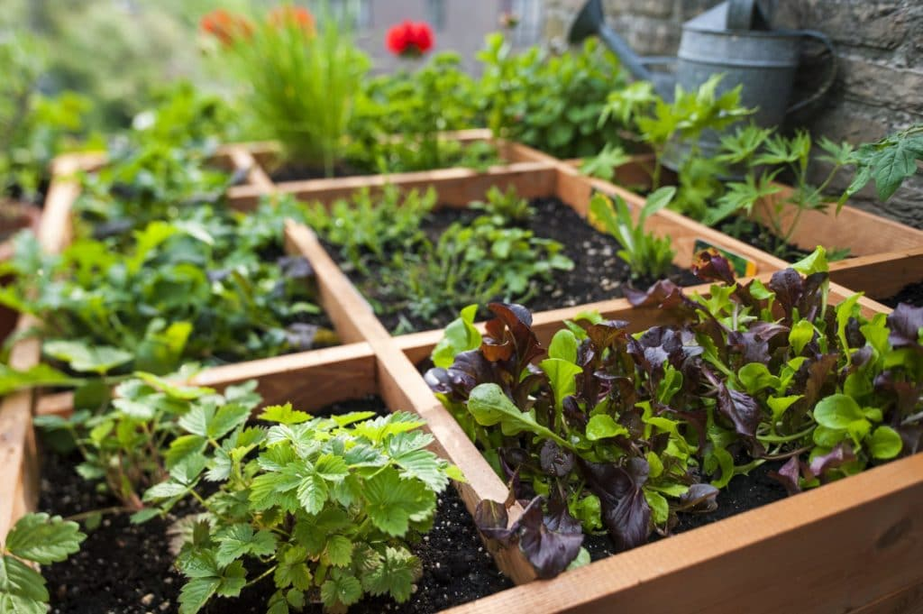 square foot gardening for preppers