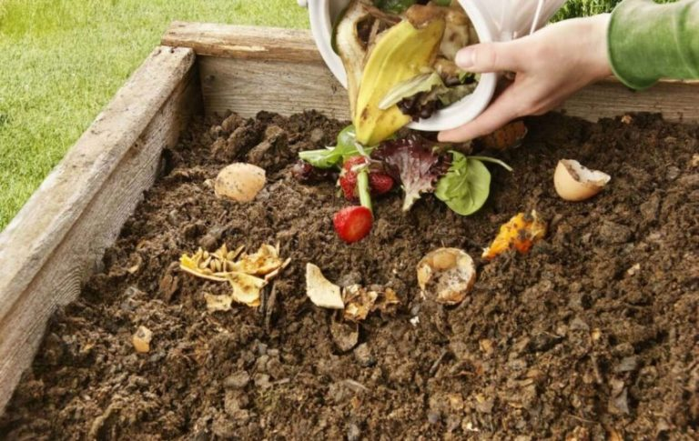 How To Prepare Soil For A Garden And Optimal Growth