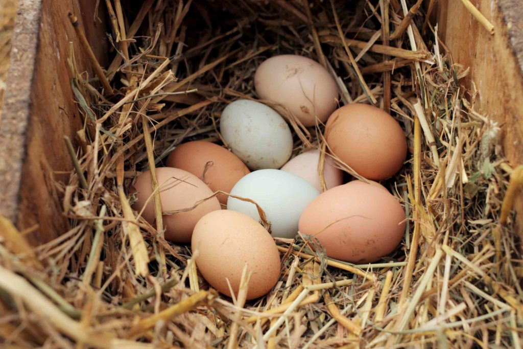 types of chickens that lay eggs in basket coop