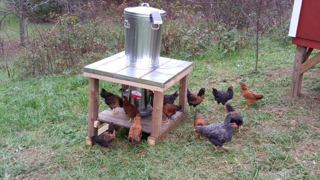 Electronic Chicken Feeders